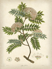 Vintage East Indian Plants VI by Maria Mendez