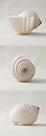 Seashell Trio II by Assaf Frank