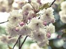 Floral Fancy by Assaf Frank