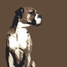 Boxer by Emily Burrowes