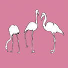 Flamingo Trio by Sandra Jacobs