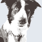 Collie by Emily Burrowes