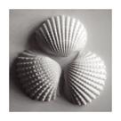 Clam Sea Shell by John Harper