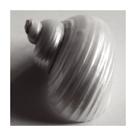 Snail Sea Shell by John Harper