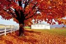 Golden Tree by Bill Coleman