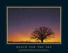 Reach For the Sky by Adam Brock