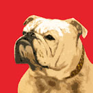 The British Bulldog, Red by The Vintage Collection