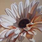 White Gerbera by Carolina Alotus