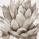 Cereus Echeveria - Fawn by Tania Bello