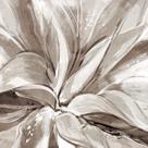 Cereus Aloe - Fawn by Tania Bello