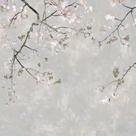 Blossom Spray II by Tania Bello