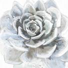 Cereus Sempervivum by Tania Bello