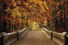 Forest Journey by Alan Lambert