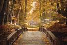 Forest Escape by Alan Lambert