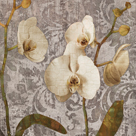 Damask Blooms II by Tania Bello