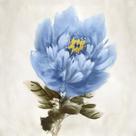Floral Dream by Tania Bello