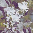 Floral Dusk I by Paul Duncan
