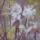 Floral Dusk II by Paul Duncan