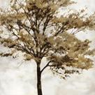 Fall Reflect by Tania Bello