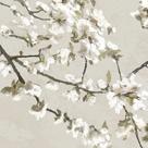 Confetti Bloom I by Tania Bello