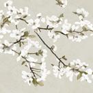 Confetti Bloom III by Tania Bello
