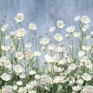 Cosmos Meadow by Tania Bello