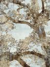 Tree Canopy I by Tania Bello