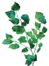 Eco Garden - Birch by Tania Bello