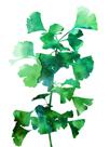 Eco Garden - Ginko by Tania Bello