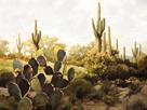 Desert Garden by Mark Chandon