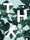 Ficus Lutea - THX by Tania Bello