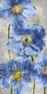 Poppy Splendour II by Tania Bello